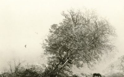 Jay Zhang – October Mist